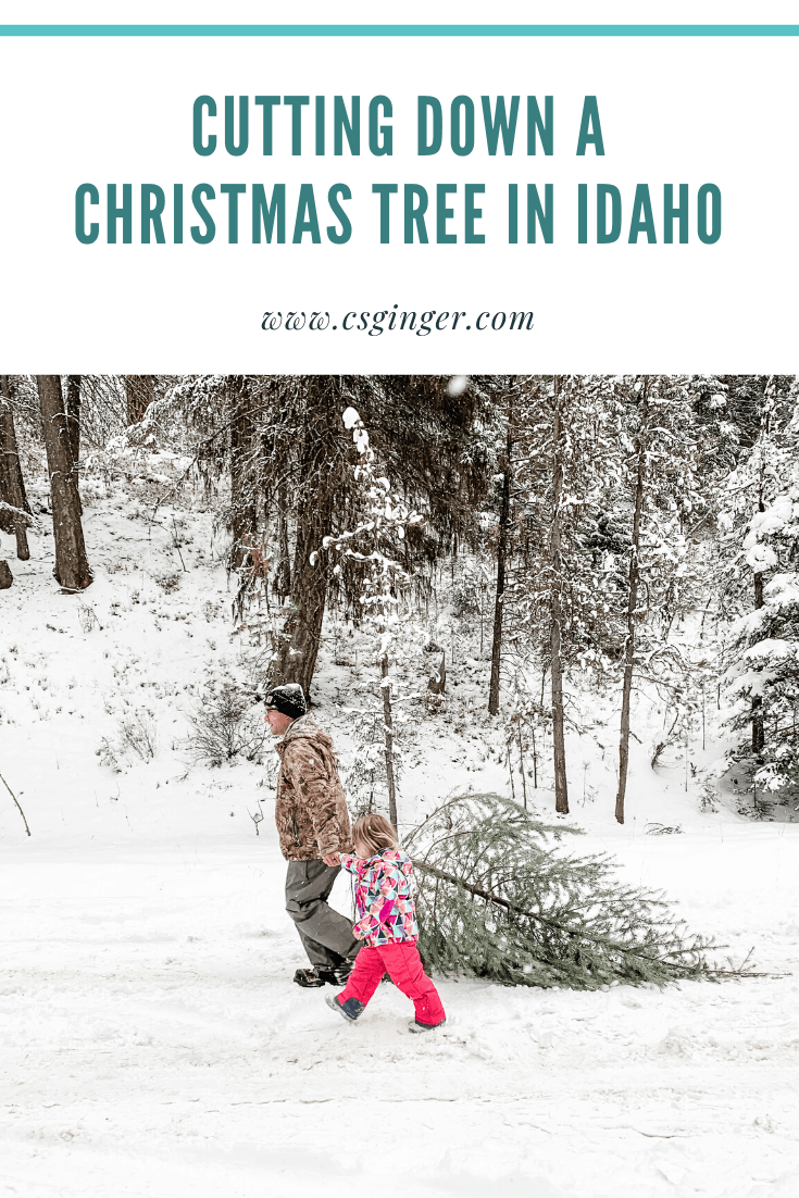 Cutting Down a Christmas Tree in Idaho